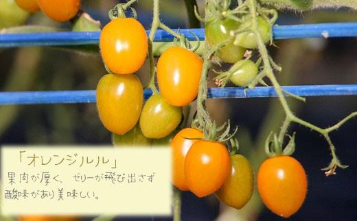 「オレンジルル」 果肉が厚く、ゼリーが飛び出さず酸味があり美味しい。