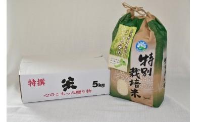 特別栽培米コシヒカリ5kg(無洗米)