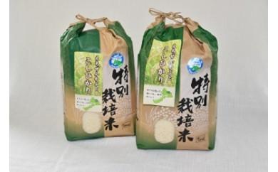 特別栽培米コシヒカリ10kg(無洗米)