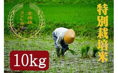 【半年間お届け】 特別栽培米コシヒカリ10kg 月1回×6カ月