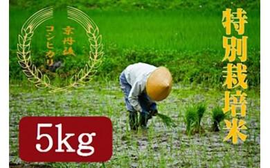 【半年間お届け】 特別栽培米コシヒカリ5kg  月1回×6カ月