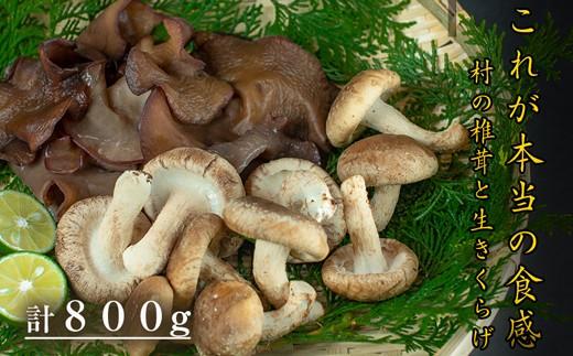 [№5852-0155]自然栽培にこだわった岡本さんちのしいたけ(200g×3袋)ときくらげ(100g×2袋)のセット
