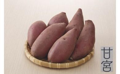 クリーミーな舌触りシルクスイート 10kg【先行予約】