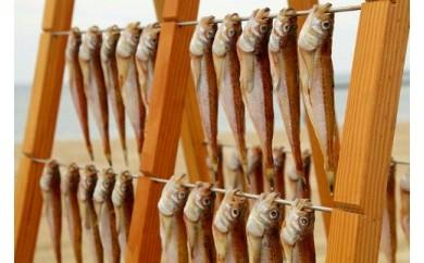 日本海産ハタハタ一夜干し  10尾セット
