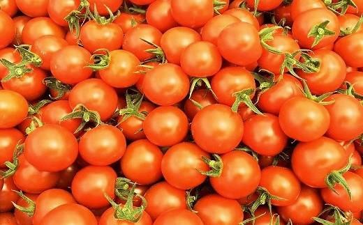 豊橋市立くすのき特別支援学校の生徒たちが栽培したミニトマト(手作り作業製品付き)[T113]