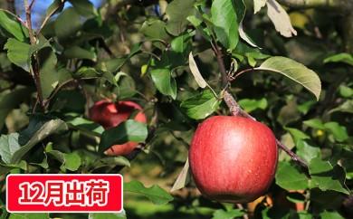 [№5761-0226]田子のサンふじ約5kg(14~18玉) 宇藤農園生産直送