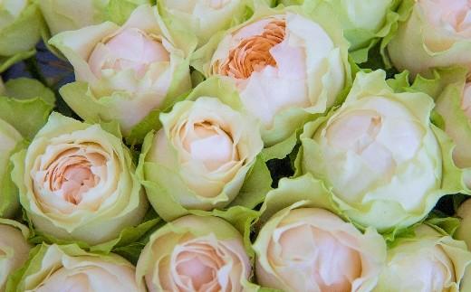 OKM07 最高級のバラ「ゴッドマザー」! ローズガーデン徳島 ゴッドマザー10本