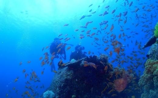 KTS03 ビーチ体験ダイビング+初めての方のSUPクルージング(1名様分) 海底少年  寄付額55,000円