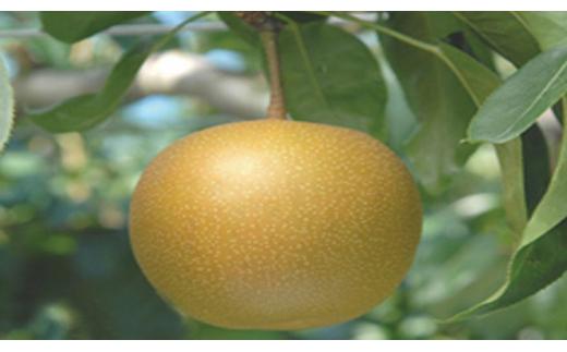 【数量限定】新品種!聖籠産梨「新美月」