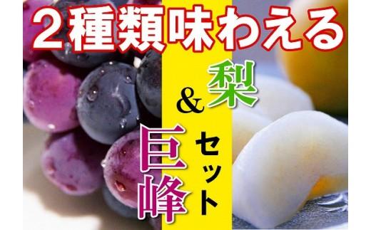 A25.  敬老の日 【旬をお届け!みずみずしいフルーツ盛り】巨峰&梨セット