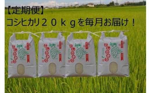 【定期便】白子産コシヒカリ 新米20kg×3回