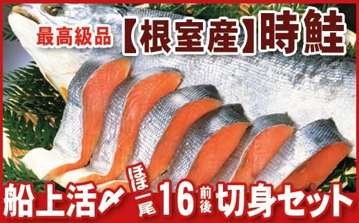 CB-07002 【北海道根室産】活〆時鮭(真空パック16切前後)