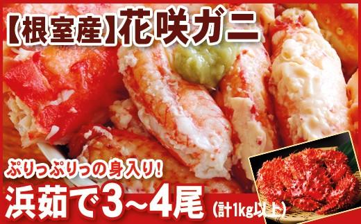 CA-07017 【北海道根室産】花咲ガニ3~4尾(計1kg以上)[351718]