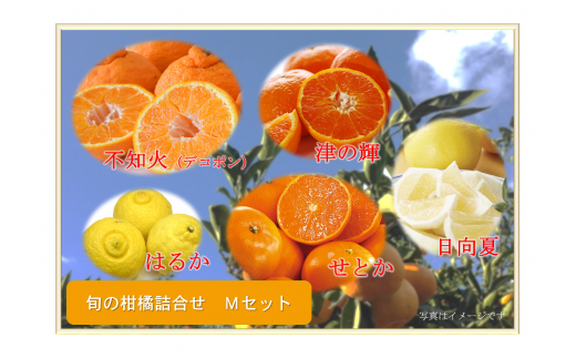 A36 南国からの贈り物「旬の柑橘詰合せ」(Mセット)