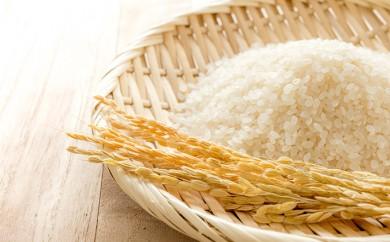 [№5651-0603]無農薬栽培 コシヒカリ白米2kg×2【2か月連続でお届け】