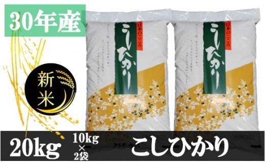 546 【平成30年新米】丸山さんが選ぶ香川県産こしひかり(精米20kg)