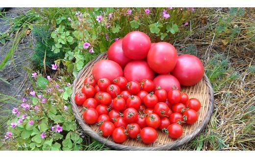 《期間限定》ひだかみ流葉 コクと旨味 有機大玉トマト ミニトマトのセット 有機JAS認定 合計1kg[A0091]