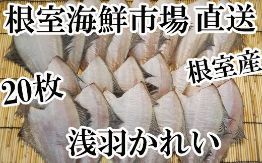 CA-60029 【北海道根室産】根室海鮮市場<直送>一夜干しあさばかれい20枚