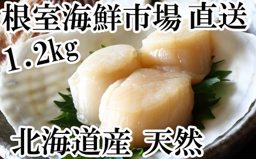 CA-60035 根室海鮮市場<直送>北海道産お刺身用ほたて貝柱1.2kg(60~72玉)