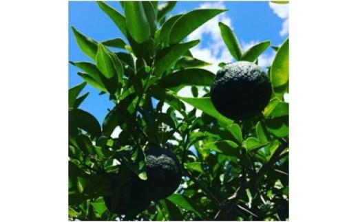 自然農法 青柚子30個