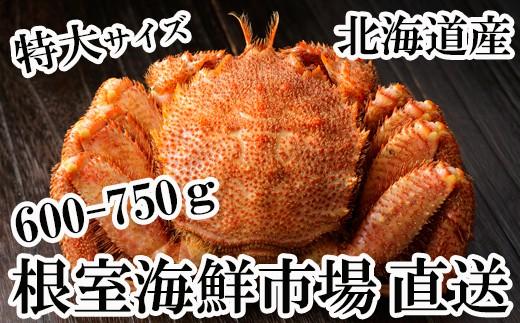 CA-60011 根室海鮮市場<直送>北海道産浜ゆで毛がに600~750g×1尾