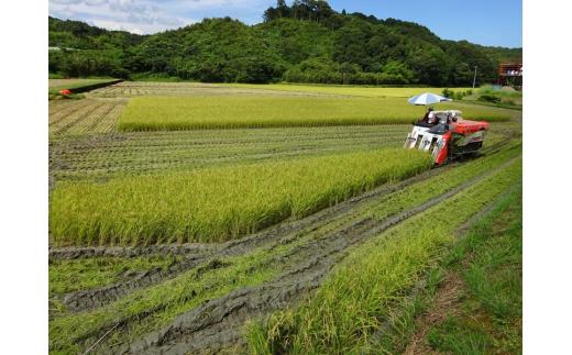 [006042]【新米】特別栽培すくも米 コシヒカリ15kg