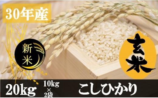 527 【平成30年度】香川県産玄米こしひかり20kg