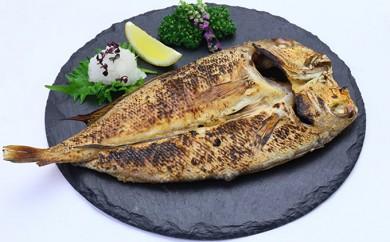 [№5941-0300]京料理の高級食材!若狭のぐじ(甘鯛)一夜干し1尾(良型250g前後)×2