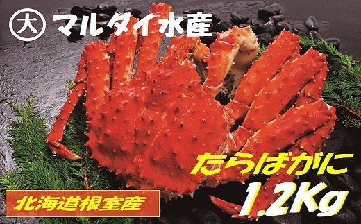 CC-45011 【北海道根室産】たらばがに姿1.2kg×1尾