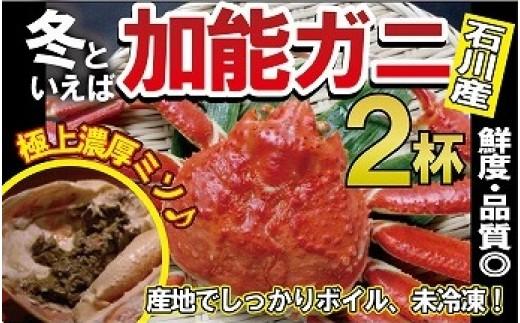 S15. 【未冷凍!冬といえば!】石川産 加能ガニ(2杯)