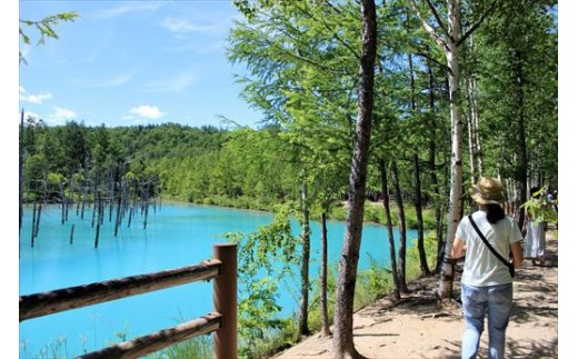 [033-01]青い池・しらひげの滝 ガイド付きサイクリングツアー(1日)