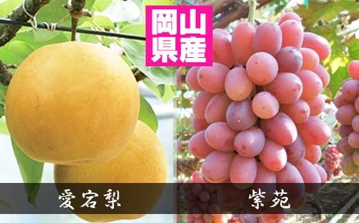 c-0045 紫苑&愛宕梨 約1.9kgセット