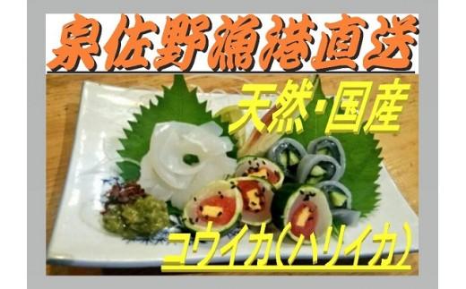 A302 泉佐野漁港直送 コウイカ(ハリイカ)