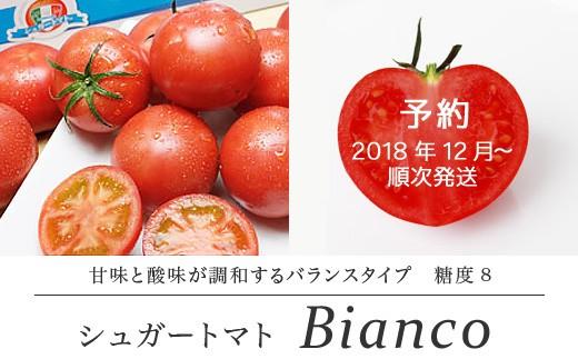 [№5725-0090]【先行予約】 シュガートマト ビアンコ08 高糖度トマト
