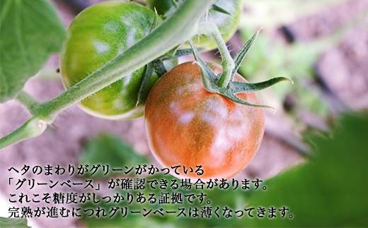 高糖度トマト,糖度10,フルーツトマト