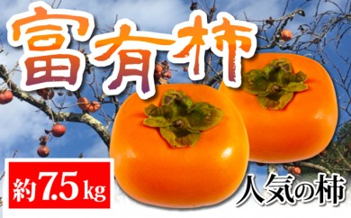 [№5745-1393]【秋の味覚】柿の代表格 和歌山の富有柿たっぷり7.5kg
