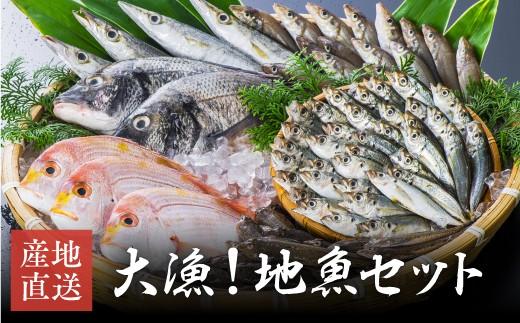 E-43 朝獲れ活〆!旬の地魚おまかせセット(高田魚市場)