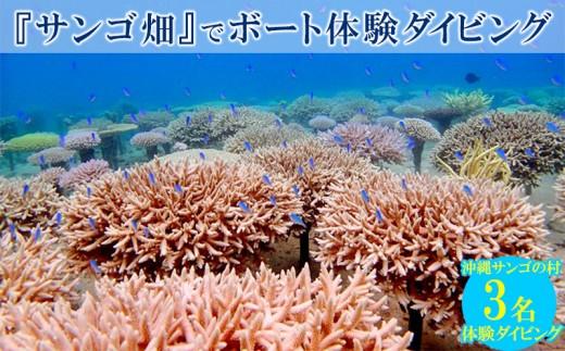 沖縄サンゴの村の『サンゴ畑』でボート体験ダイビング(3名様)
