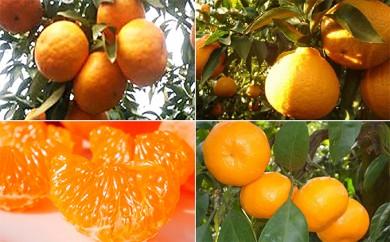 [№5850-0325]【4回頒布会】フジカワ果樹園オリジナル・季節の柑橘セット