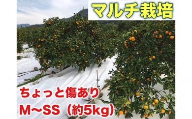 [№5745-1327]ちょっと傷あり【マルチ栽培・有田みかん】約5kg(M~SSサイズおまかせ)
