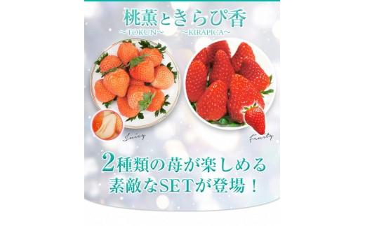 a10-056 桃薫・きらぴ香 計4パックのいちごの食べ比べセット