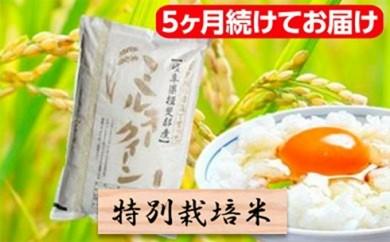 [№5644-0456]特別栽培米★[頒布会] 5カ月★毎月 精米10kg または玄米11kg 【ミルキークイーン】