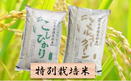 [№5644-0440]特別栽培米★精米20kg(分搗き可)または玄米22kg 【コシヒカリ・ミルキークイーン】