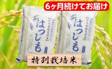 [№5644-0471]特別栽培米★[頒布会] 6カ月★毎月 精米20kg または玄米22kg 【ハツシモ】