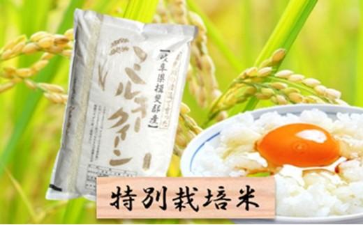 [№5644-0432]特別栽培米★精米10kg(分搗き可)または玄米11kg 【ミルキークイーン】