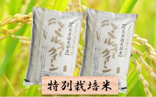 [№5644-0436]特別栽培米★精米20kg(分搗き可)または玄米22kg 【ミルキークイーン】
