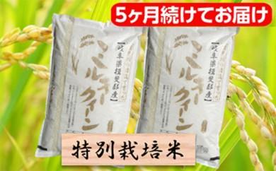 [№5644-0464]特別栽培米★[頒布会] 5カ月★毎月 精米20kg または玄米22kg 【ミルキークイーン】