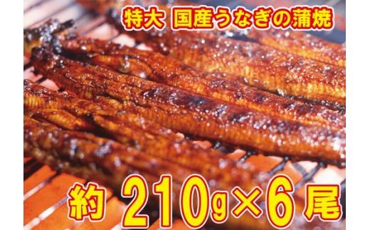 b10-003 うなぎの蒲焼き 特大サイズ6尾(約210g×6尾)