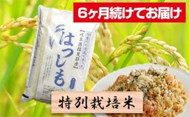 [№5644-0463]特別栽培米★[頒布会] 6カ月★毎月 精米10kg または玄米11kg 【ハツシモ】