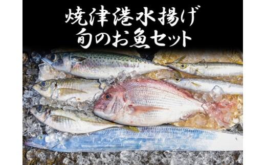 a50-048 焼津港水揚げ 旬のお魚セット